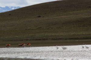 Flamingos rosa e brancos pelo caminho de terra, rn-40