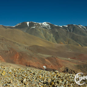 #20 - Cicloviagem norte Argentina 1 de 2 - Podcast Pedarilhos